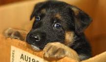 dogbox-cropped