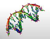 DNA_3D_Model
